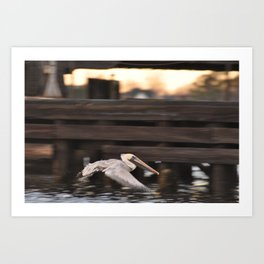 Pelican in Flight Over the Water Art Print