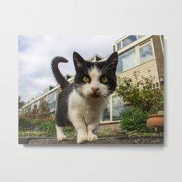 Close up cat on the street Metal Print
