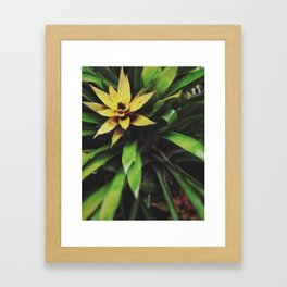Guzmania Framed Art Print