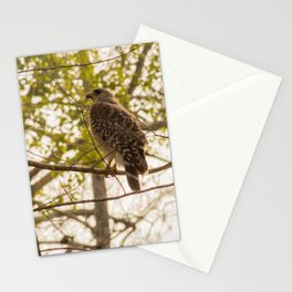 Hawk in the Trees Stationery Cards