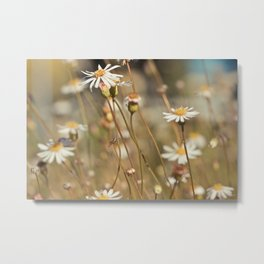 Wild flower - Botanical Photography Metal Print