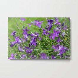 Bellflowers on meadow Metal Print