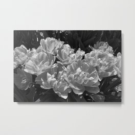 Foxy Foxtails Black and White Metal Print