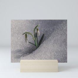 Snowdrop flowers in the snow Mini Art Print