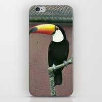 toucan iPhone & iPod Skins featuring Toucan by Lili Batista