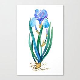 Light Blue Iris Canvas Print