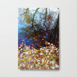 Maple Leaves floating on the Lake Reflecting Trees. Autumn, Fall Metal Print