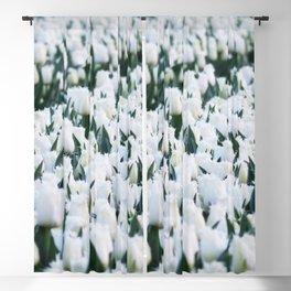 Tulips field 17 Blackout Curtain