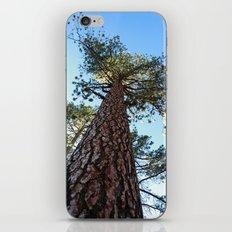 Sequoia Tree iPhone & iPod Skin