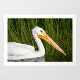 The American White Pelican Art Print