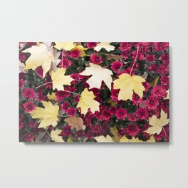 flowers, flowers, flowers, autumn, red and yellow, white and orange, flowers with a blurred backgrou Metal Print