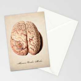 Human Brain Anatomy Drawing Stationery Cards