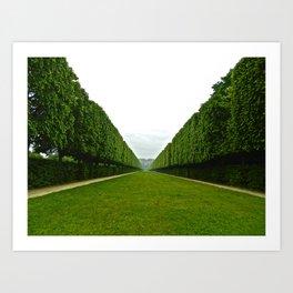 Between The Hedges Art Print