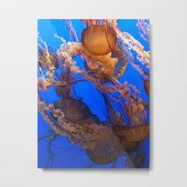 Jellyfish - Western Sea Nettle Metal Print