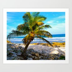 Mexican Palm Art Print
