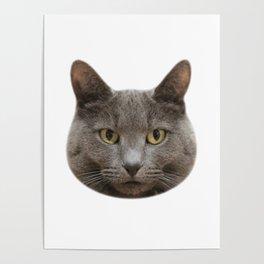 Mango, the cat Poster