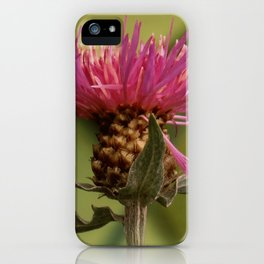 Knapweed iPhone Case