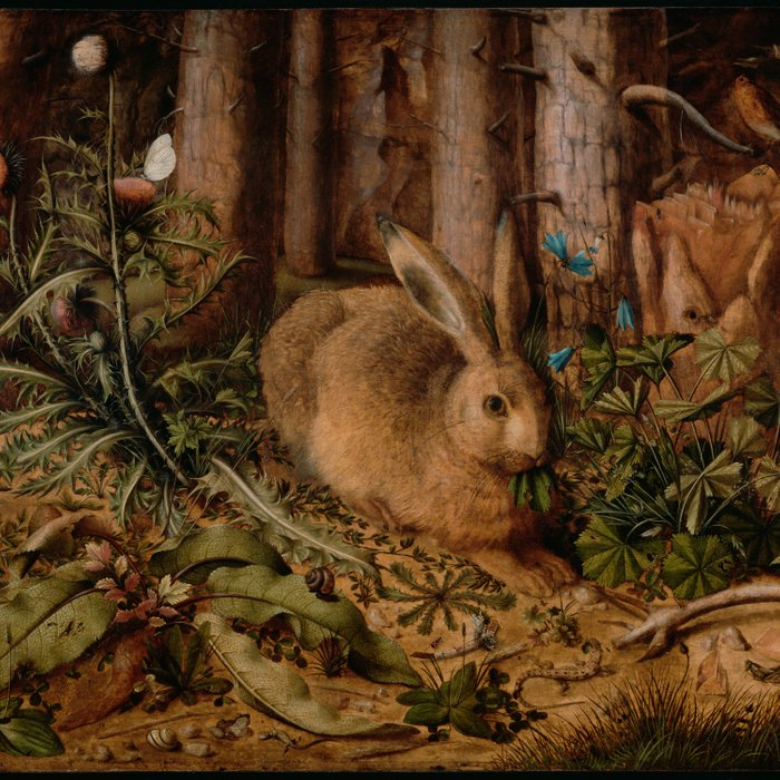 A Hare In The Forest Hans Hoffmann Comforters