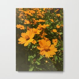 Sunshine Sprouts Metal Print