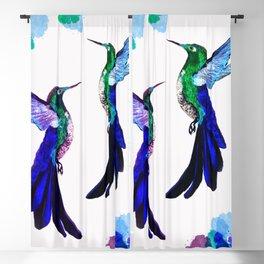 Hummingbird spirit duo Blackout Curtain
