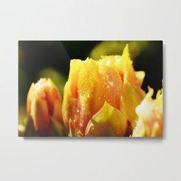 Raindrop Cactus Flower Metal Print