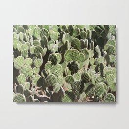 Cactus Wall #1, Opuntia Microdasys Prickly Pear Cactus, aka Bunny Ears, Polka Dot, white red green Metal Print