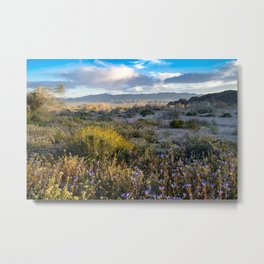 Springtime superbloom in the Mojave Desert, with wildflowers Metal Print