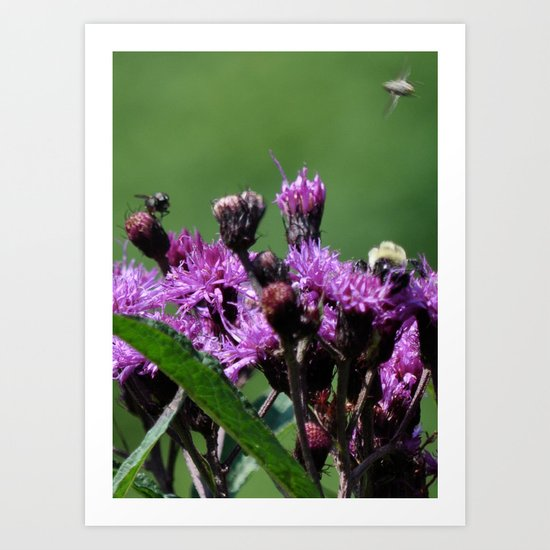 Violet Flowers Bee Photo Photograph 1  Art Print