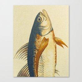 Piscibus 8 Canvas Print
