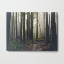 Rainforest of the Pacific Northwest Metal Print