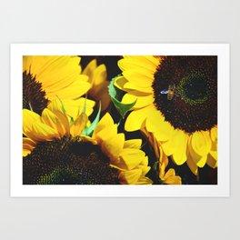honey to the bee Art Print