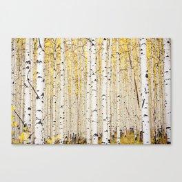 Aspen Trunks Canvas Print