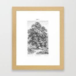Linden Tree Print from 1800's Encyclopedia Framed Art Print