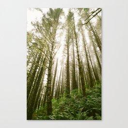 Forest // Light Canvas Print