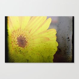 Yellow Gerber Canvas Print