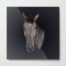 Danny - horse Metal Print