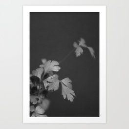 Parsley in Black and White Art Print