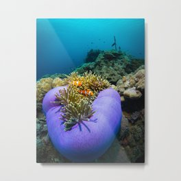 Purple anemone Metal Print
