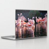 dublin Laptop & iPad Skins featuring Flamingos, Dublin Zoo by JBuck