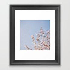 Soft Dreams Framed Art Print