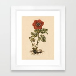1800s Encyclopedia Lithograph of Anemone Flower Framed Art Print