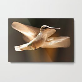 The Delight Of Hummingbird Wings Metal Print