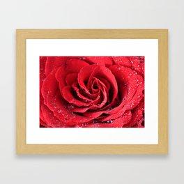 Red Swirl Rose Framed Art Print
