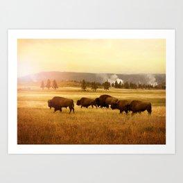 Bison at Yellowstone Art Print