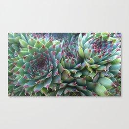 Succulent crowd Canvas Print