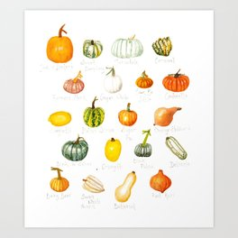 Pumpkins and Squashes Art Print