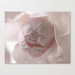 soft pink rose Canvas Print