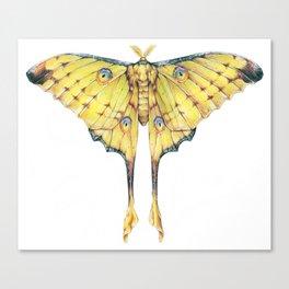 Comet Moth Canvas Print