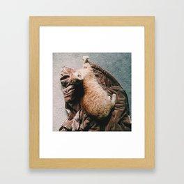 Fern Stare Framed Art Print