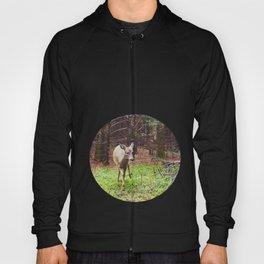deer 2.  Hoody
